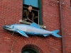 eastport-sardine-3