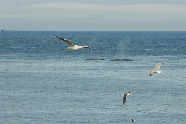 Wahes and Gulls